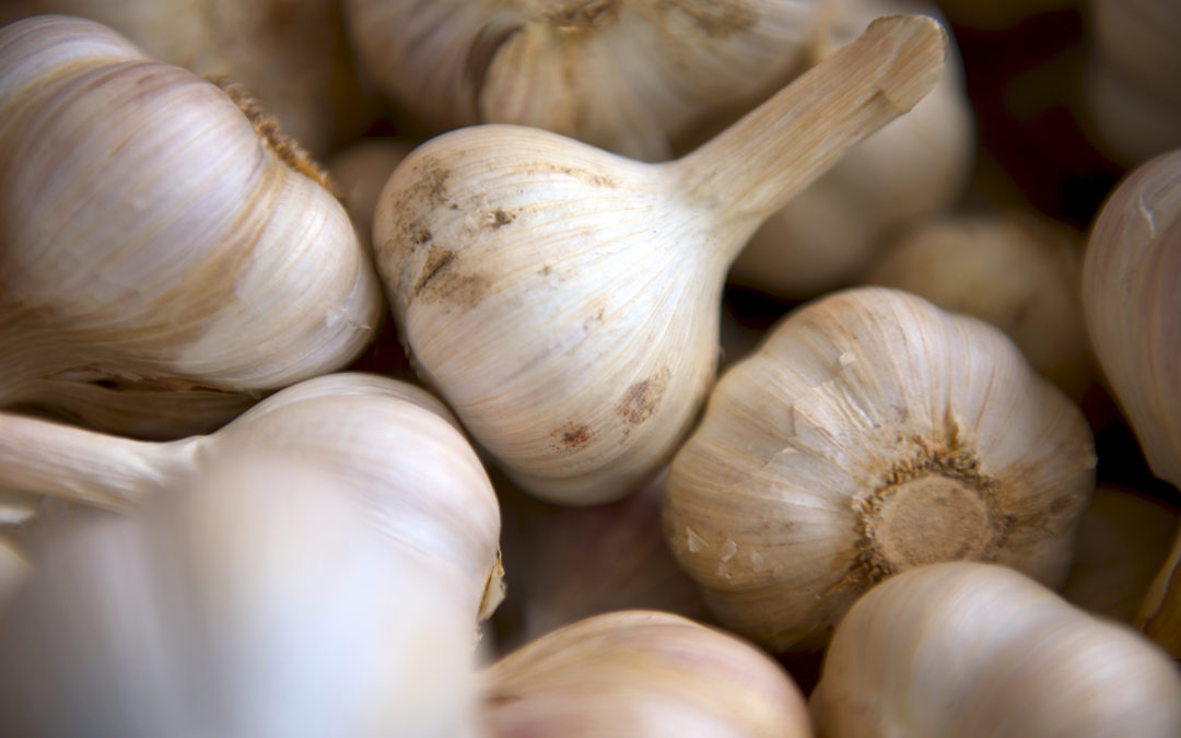 Keep Calm And Garlic On…It's National Garlic Day!